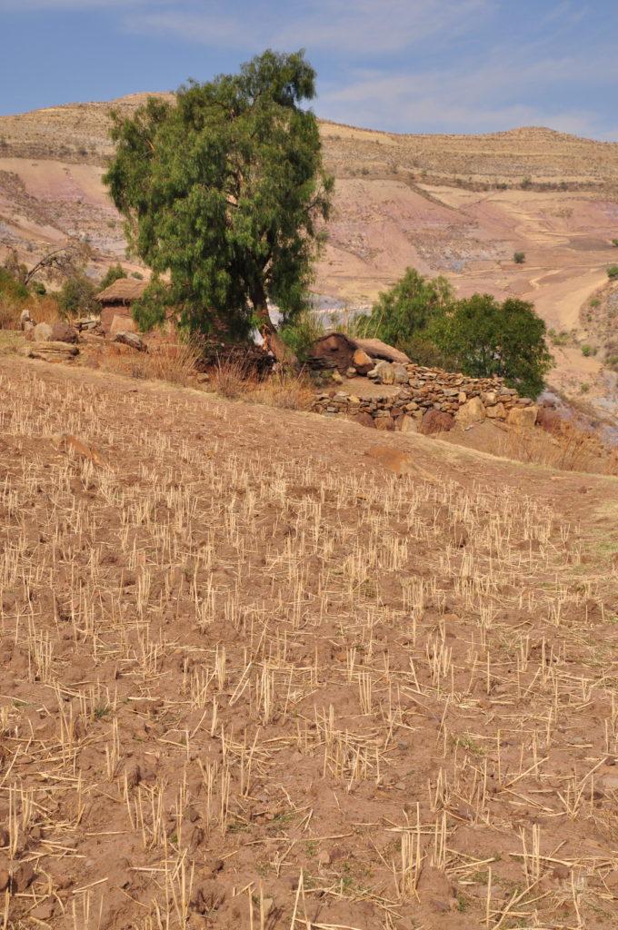 Bolivian landscape tree