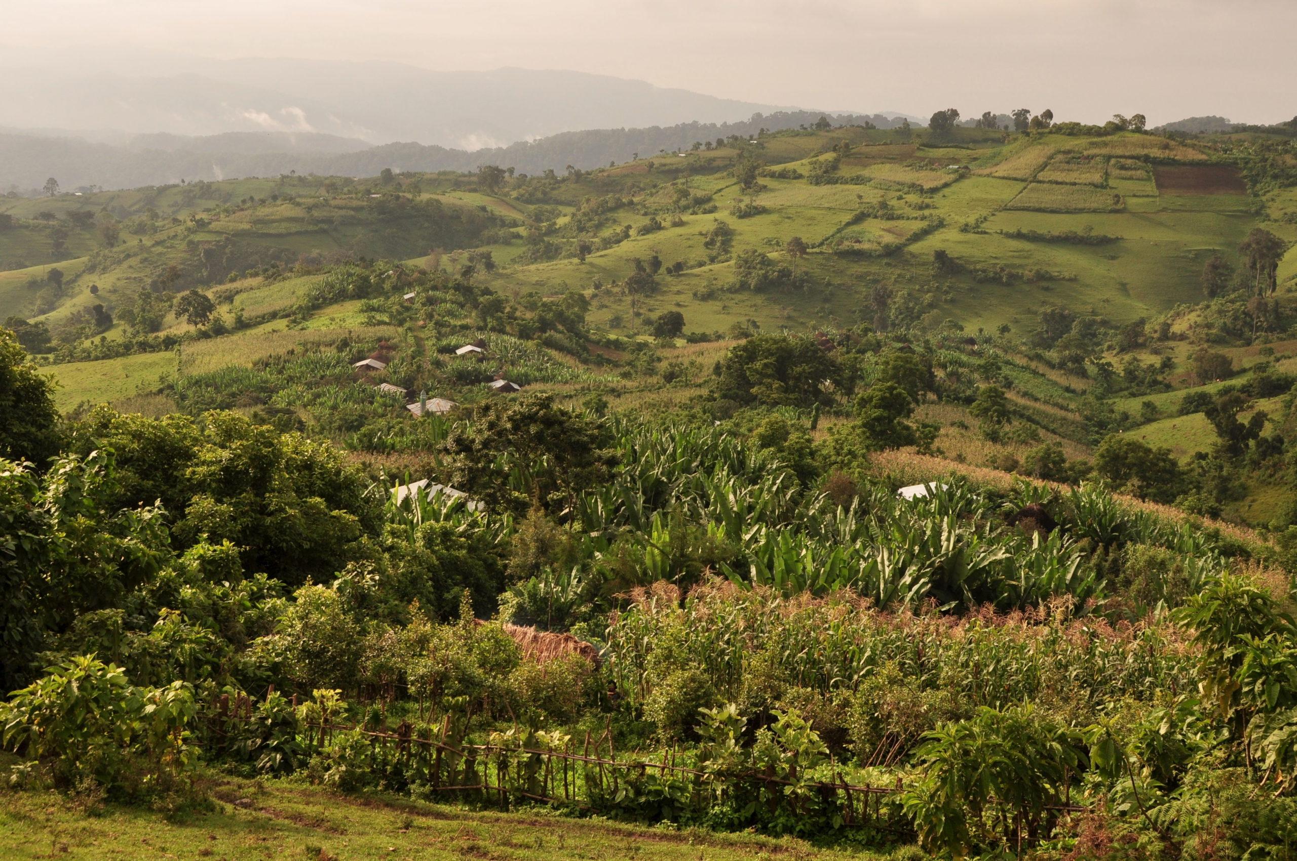 Ethiopian landscape 2